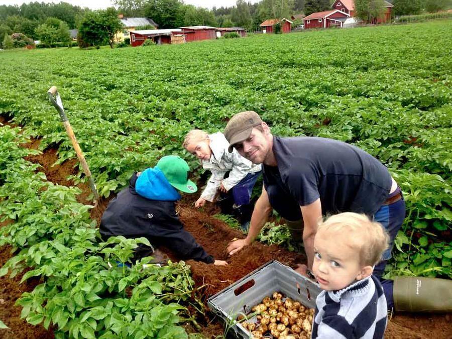 Grönsaksbonden Per Wålstedt odlar ekologiska grönsaker.