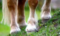 Körde sönder hästhage med fyrhjuling