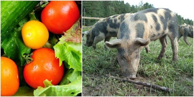 Fem punkter för en mer seriös veganrörelse
