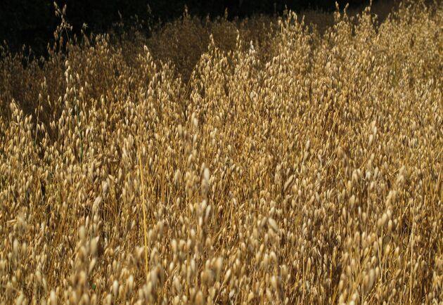 Fazer vill bli den ledande aktören inom växtbaserad mat i Norra Europa. Arkivbild.