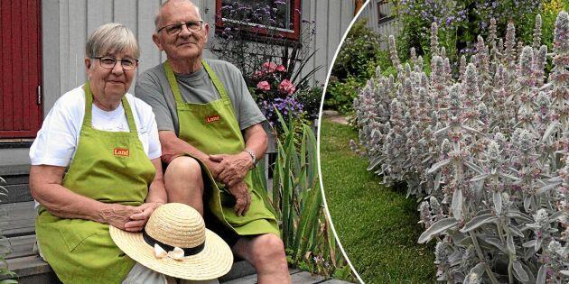 Succé för Öppen Trädgård – njut av bilderna från årets trädgårdsfest
