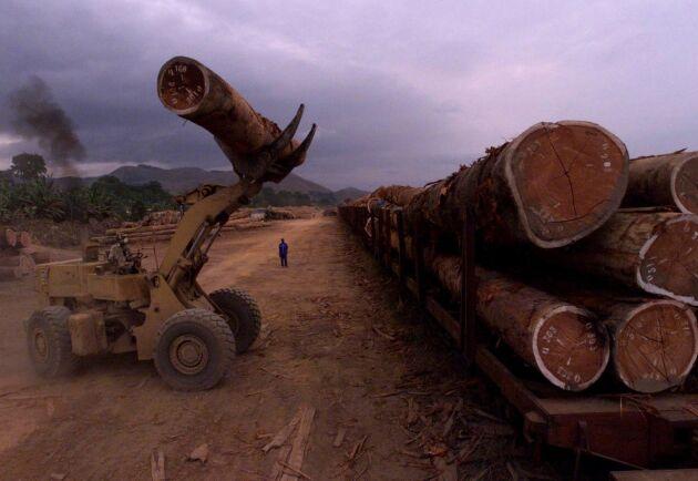 Lastning av lagligt avverkat timmer i Gabon. Arkivbild.