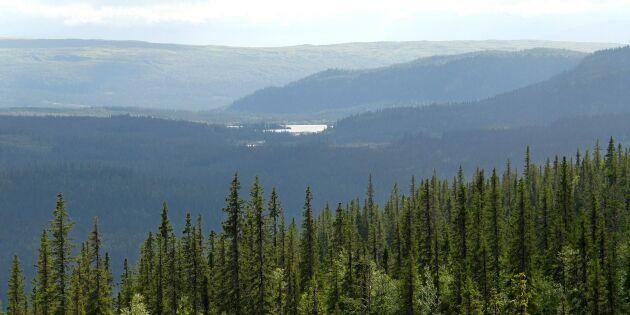 Kritik mot utredning av skogsvårdslagen