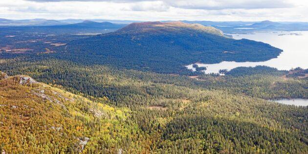 Vi behöver frivilliga skyddsformer för fjällnära skog
