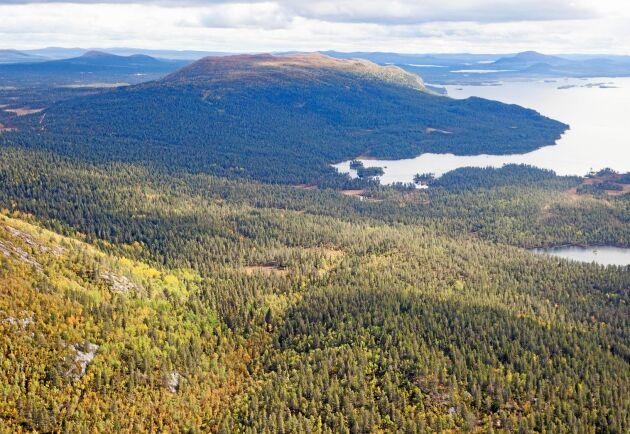 Förhoppningarna var stora att Skogsutredningen skulle presentera en acceptabel lösning för skogsägare i fjällnära läge.