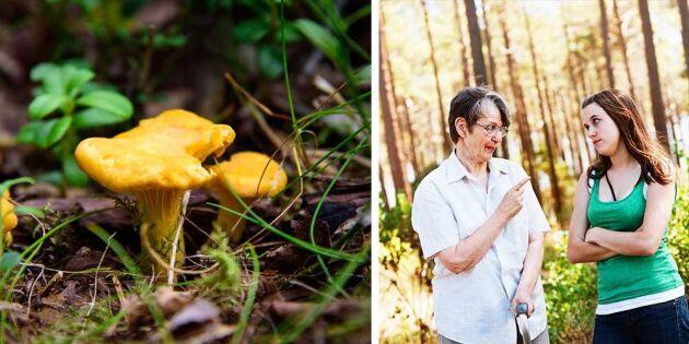 Ajabaja – så uppför du dig i kantarellskogen