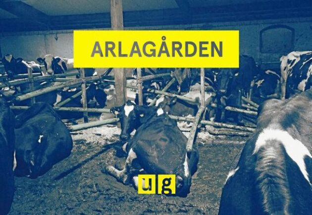 """Bild från Uppdrag gransknings reportage """"Arlagården"""". Enligt Sveriges Television visar bilden förhållandena på gården i reportaget."""
