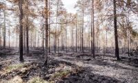 Allmänheten förbjuds beträda brandskadade skogar