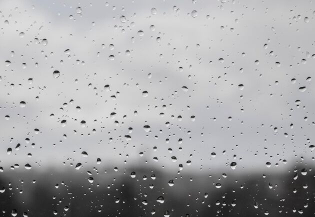 Många dagar med regn under juli har gjort att grundvattennivåerna höjts. Arkivbild