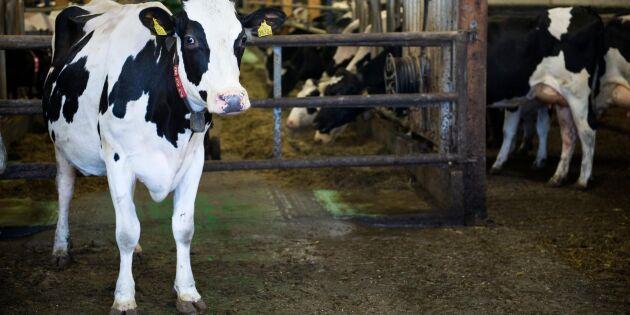 Arla skärper kontrollen på gårdarna