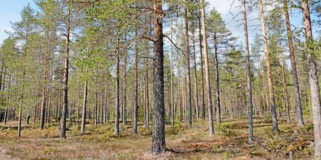 Förslag på hur skogsproduktionen ska öka försenas