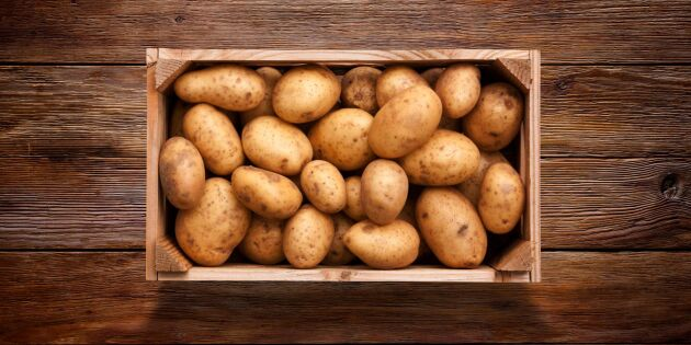 Potatis het i Årets Kock-final