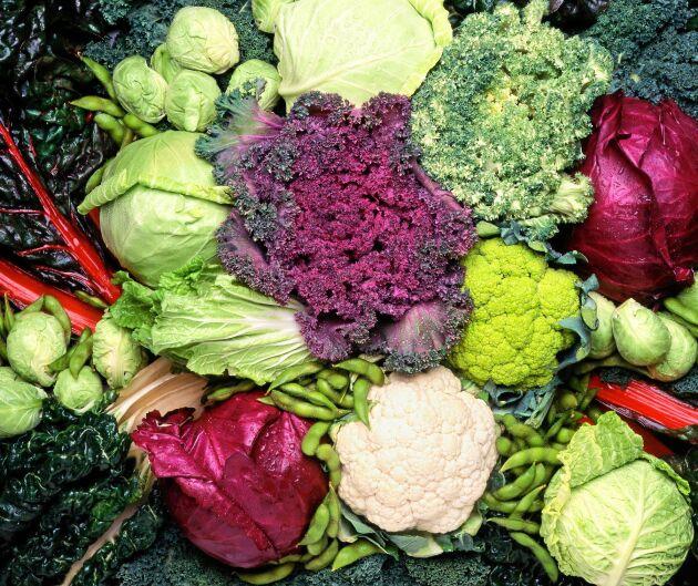 Kål är en av våra nyttigaste grönsaker. Finns många olika kåltyper att välja på.