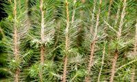 Kemikaliebehandling av skog kan utfasas
