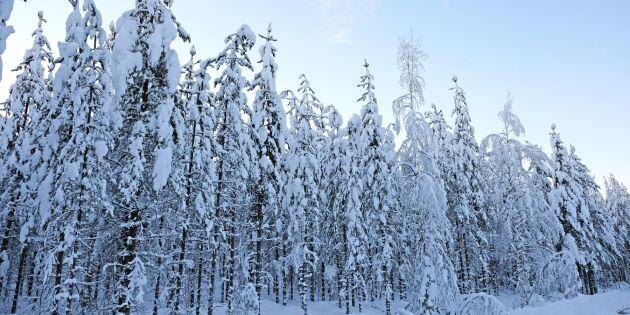Stigande priser på skogsfastigheter
