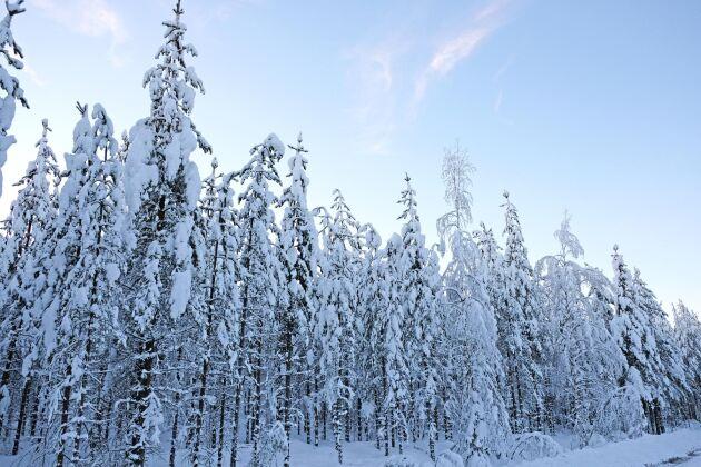 Priserna på skogsmark fortsätter att stiga.