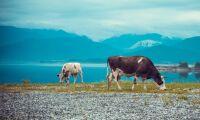5 000 kor skickas till Sibirien
