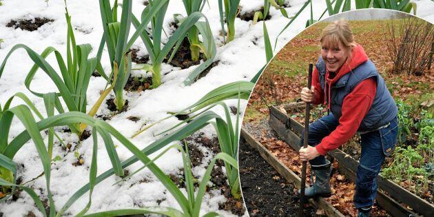 Odlarskola oktober: Grödorna som klarar kölden