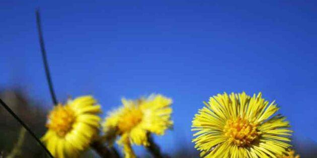 Ut och njut! Så långt har våren kommit där du bor