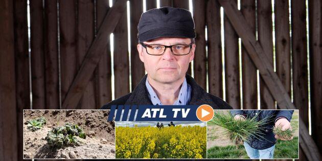 ATL TV: Frosten slår mot potatis och äpplen