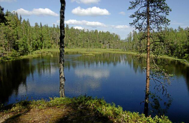 Skogen har en avgörande betydelse för Finlands klimatmål. Den tar i dag upp nära nog hälften av Finlands totala koldioxidutsläpp. Utan hjälp av skogen får landet svårt att uppnå målet att bli klimatneutralt, enligt den finländske utrikesministern Pekka Haavisto.