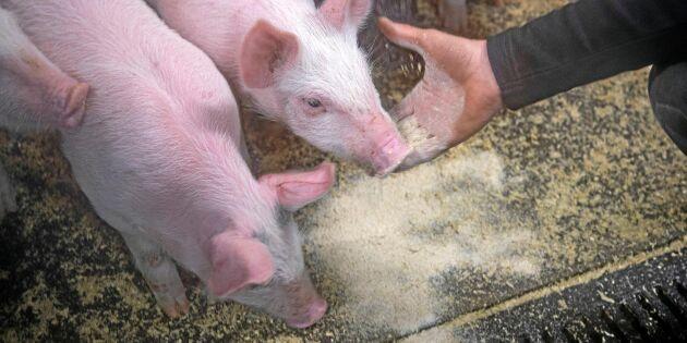 Fördel för svenskt kött när EU skärper antibiotikalag