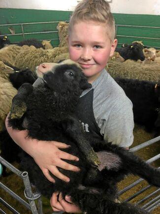Den första filmen handlar om elvaårige Harry Johansson som både har egna får och höns.