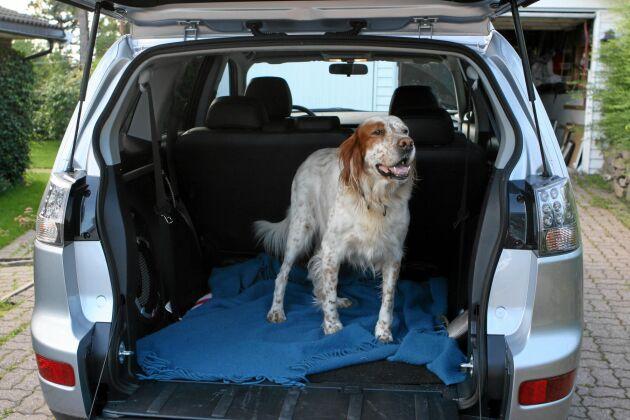 Det allra bästa är att hunden sitter i bakluckan när den åker med i bilen. Men den måste sitta i bur eller bakom ett bra galler – inte lös.