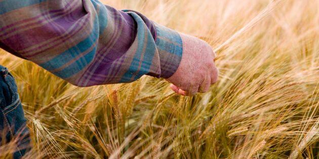 Högre utbildning bland yngre lantbrukare