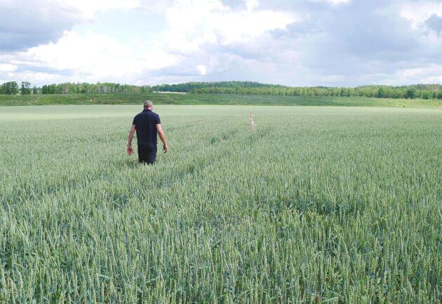 Jan Jakobsson är på väg ut i fältet för att visa upp de järnrör som satts upp utan hans vetskap.
