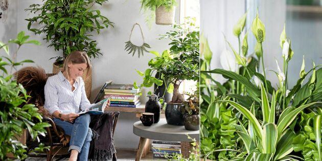Inred grönt: Nio växter som gör luften bättre inne