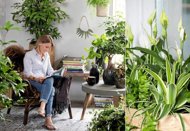 Inred ett hörn där du kan njuta av grönskan. Här står sparris, murgröna, aralia, citronfikus och buskdracena. Alla växterna är kända för att göra gott.