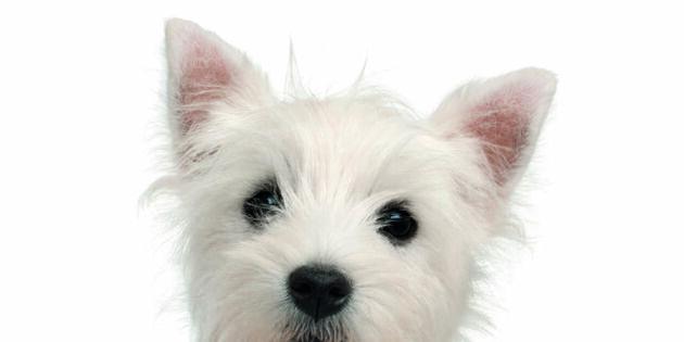 8 bästa hundraserna för barnfamiljer