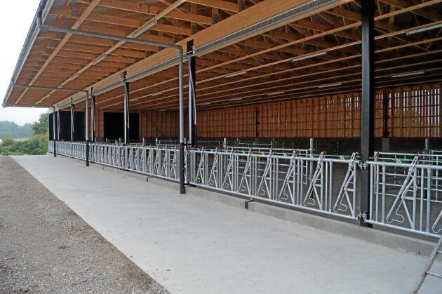 Nybyggt dikostall hos Henrik Pettersson, Öljersjö gård, utanför Karlskrona. Observera den breda fodergången som ligger under tak med bred marginal.