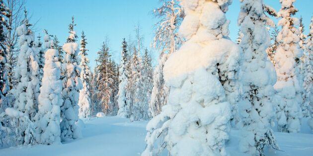 Upprop om nya direktiv för Sveaskog