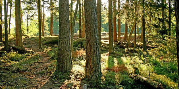 Arealen av certifierad skog ökar
