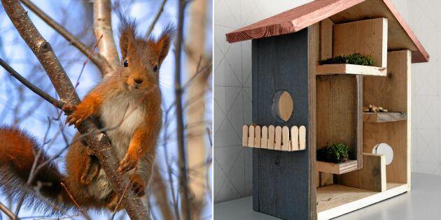 Vårsnickra: Bygg en lyxvilla till ekorren