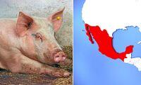 Mexiko kan börja importera griskött från EU