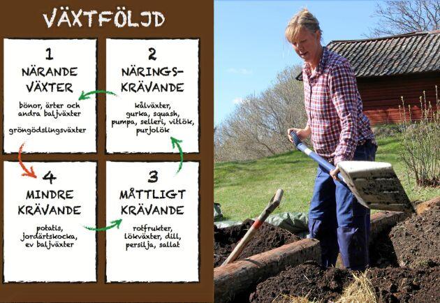 Ordning och reda. Planera växtföljden så mår odlingarna bäst. Foto: Bella Linde.