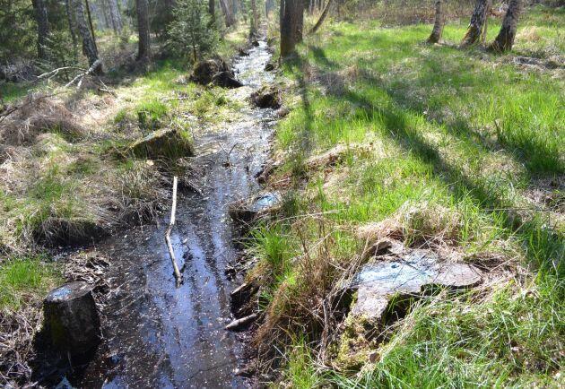 Hyggets snitsling följer ett gammalt dike som enligt fastighetskartan ligger flera meter in på Marcus Werjefeldts mark. Dessutom har träd avverkats på bägge sidor om diket.