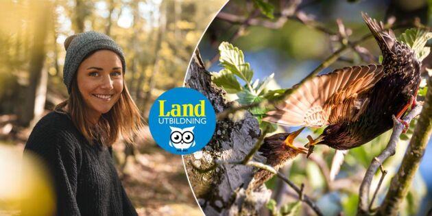Börja skåda fågel med Lands inspirerande webbkurs