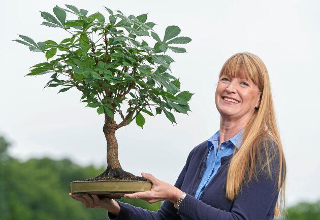 En av Maria Arborelius favoriter - en kastanje. Den äldsta bonsaien hon har i sin trädgård är en kastanje från 1979 som kommer från hennes föräldrahem.