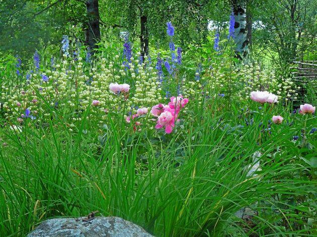 Öppen trädgård bjuder på inspiration för alla trädgårdsälskare.