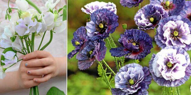 Årets frönyheter är här: Odla vackra blommor till buketterna