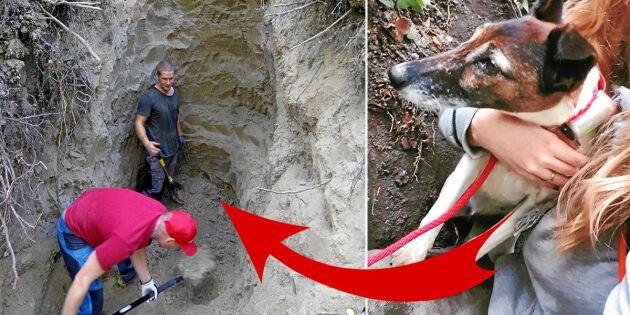 Hunden Alva räddades ur grytet – efter 37 timmar