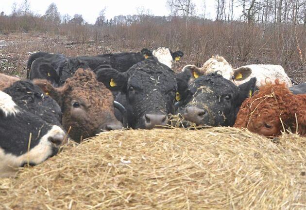 För att kunna ge tillräcklig med mat till djuren i Bläsinge i framtiden behöver vattenförsörjningen tryggas.