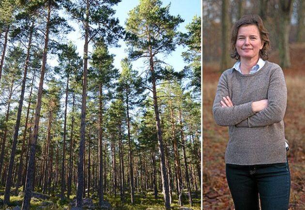 ATL:s krönikör Birgitta Sennerdal.
