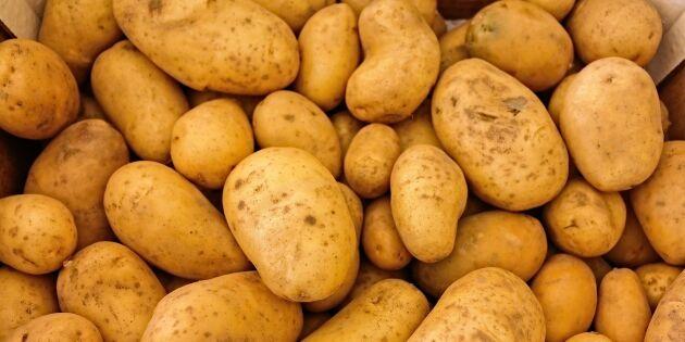 Europa svämmar över av potatis