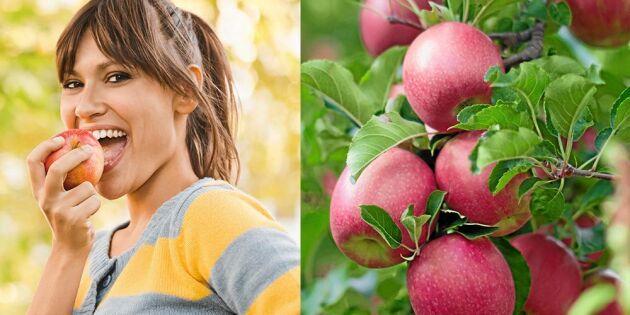 Överraskande forskning: Här är äpplena som är bäst – för magen!