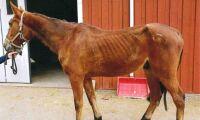 Travtränare dömd för djurplågeri